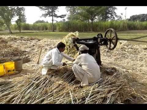 Making Gur in village of gangapur 591 gb Pakistan