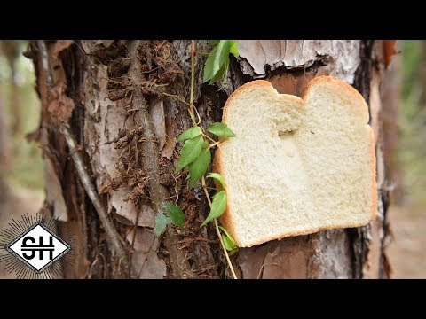 Pictures of Bread that have been Stapled to Trees