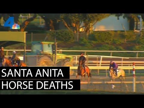 Santa Anita's Disturbing Horse Deaths  | NBCLA