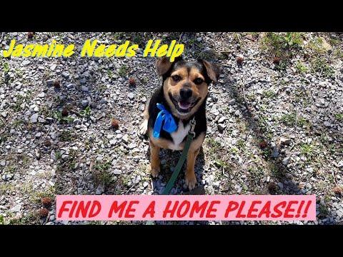 I NEED  A HOME!! DOG RESCUE!