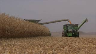 John Deere S680 Combine and 18 Row Head in Action Peterson Corn Harvest November 2016