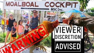 Would you go COCKFIGHTING? (MOALBOAL, Philippines)( 2019) (Sabong)