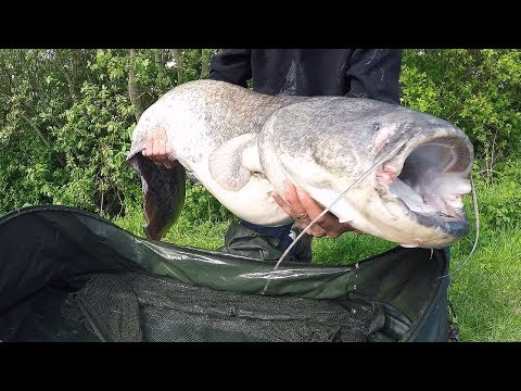 Fishing For GIANT CATFISH - New UK PB!