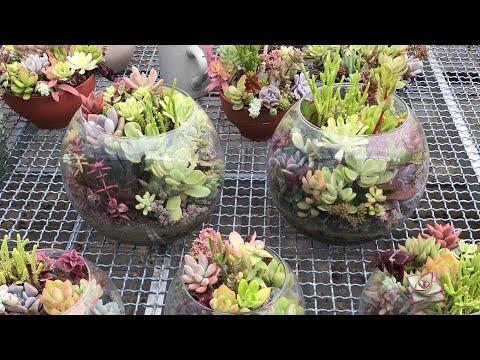 Как посадить суккуленты в стеклянный флорариум
