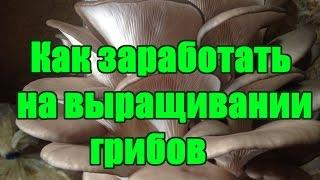 видео Выращивание грибов как бизнес
