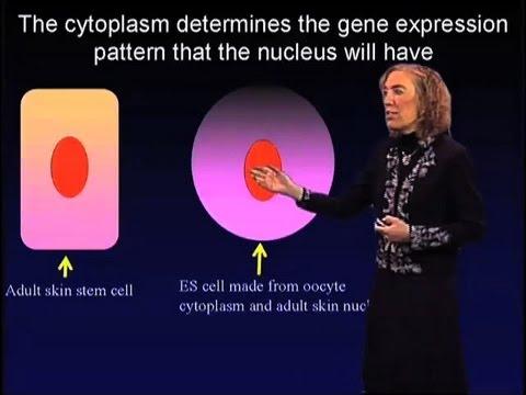Adult Stem Cells - Elaine Fuchs (Rockefeller/HHMI)