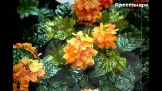 Красивые названия цветов