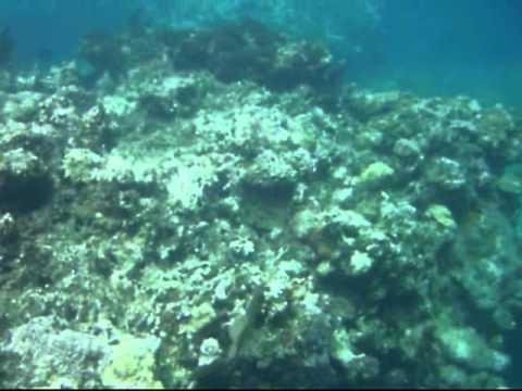 Mesoamerican Barrier Reef System, Cayos Cochinos, Honduras (Part I)