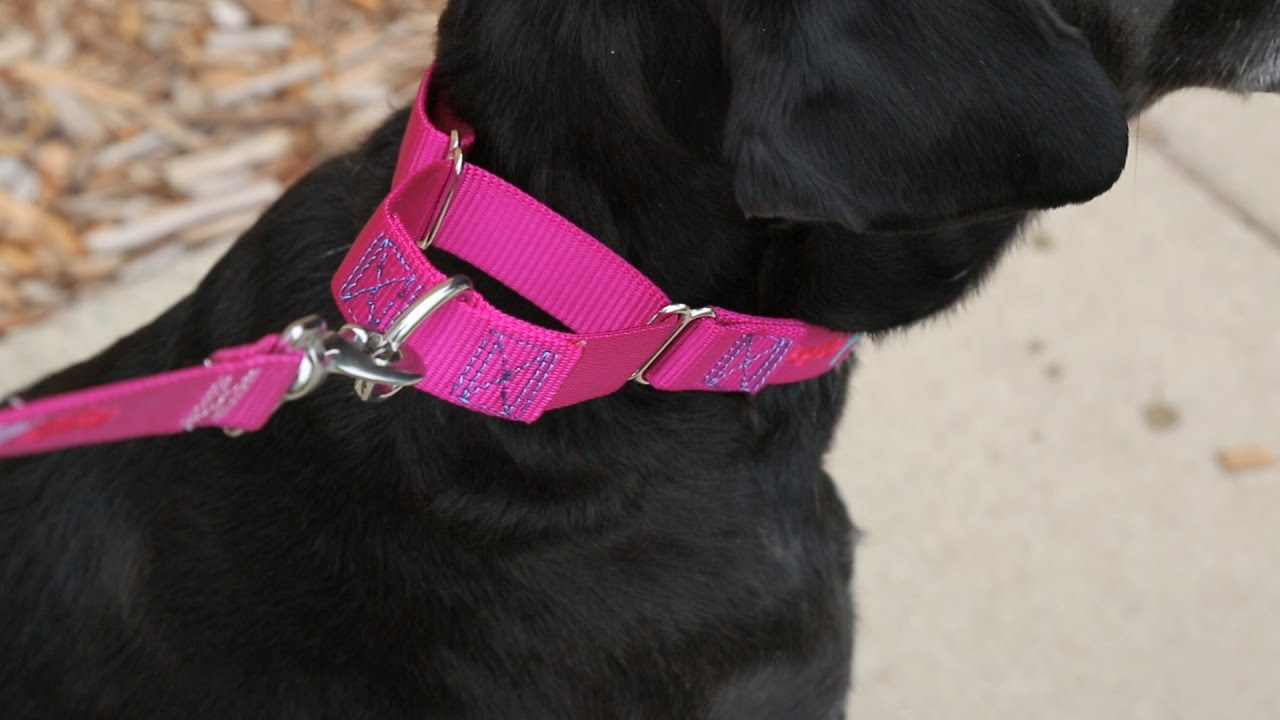 How To Make A Dog Martingale Collar