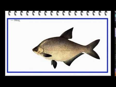 Рыба -название и фото.КУСАРЫ.