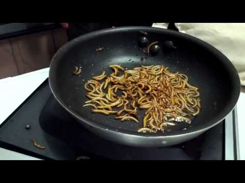 Cooking meal worms...
