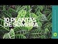 Gambar cover 10 plantas de SOMBRA