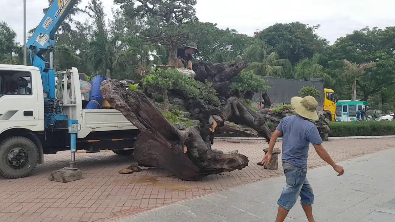 Trước giờ khai mạc triển lãm cây cảnh Bonsai Quy Nhơn Bình Định 2029