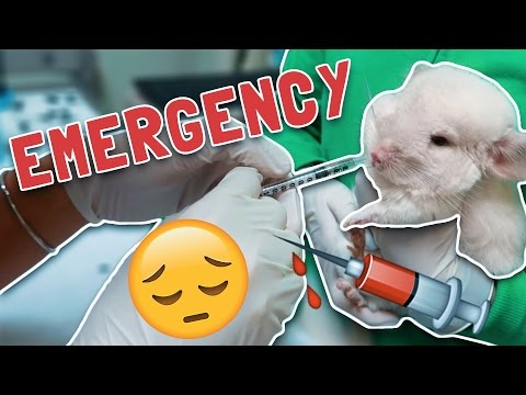 IT'S WORSE THAN WE THOUGHT!! (EMERGENCY ROOM)