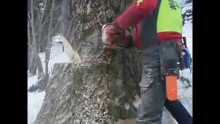 Problembaumfällung - Holzschlägerung in schwierigem Gelände