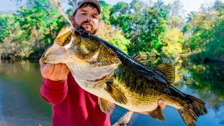 LIVE BAIT Fishing for The Bass of a LIFETIME!!!