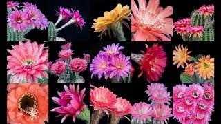 Freaky Flowers 3 - Timelapse
