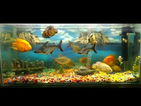Feature Your Fish Tank - 5 Fish Tanks