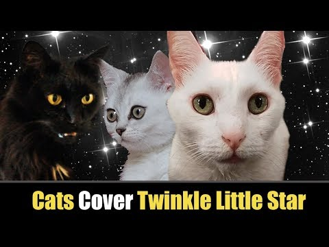 Twinkle Twinkle Little Star - Cats Version - Singing Cats