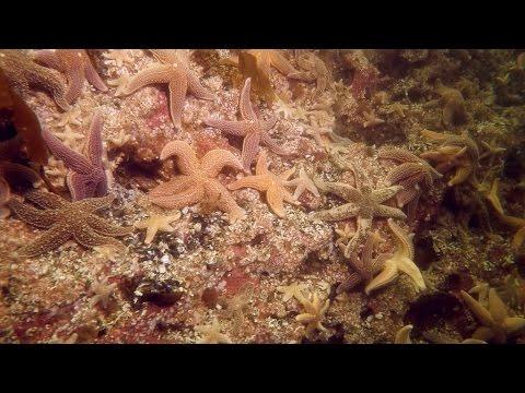 Plongée au large de Les Méchins / Diving offshore at Les Méchins