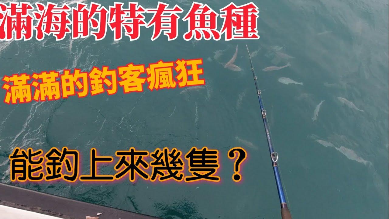 最近釣魚人為之瘋狂的魚,想釣的好,就必須注意這些