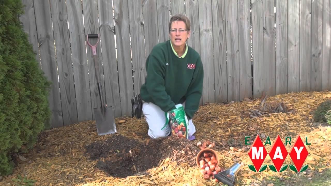 Earl May Garden Center Planting Fall Bulbs Youtube