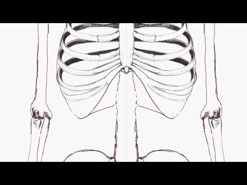 Human Anatomy: How to draw the rib-cage - (front view)