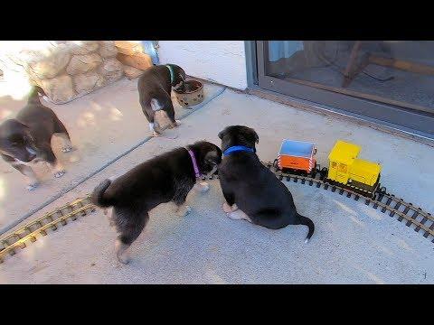 Puppies Versus Model Trains