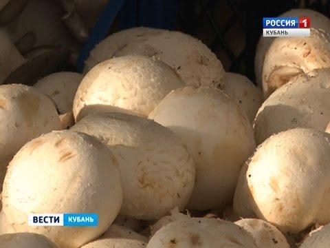 Выращивание грибов вешенка в Краснодаре. Сравнить цены