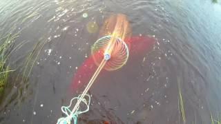 ловля рыбы кастинговой сетью с большим кольцом видео