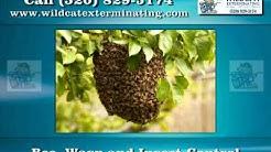 Pest Control in Tucson AZ - Wildcat Exterminating