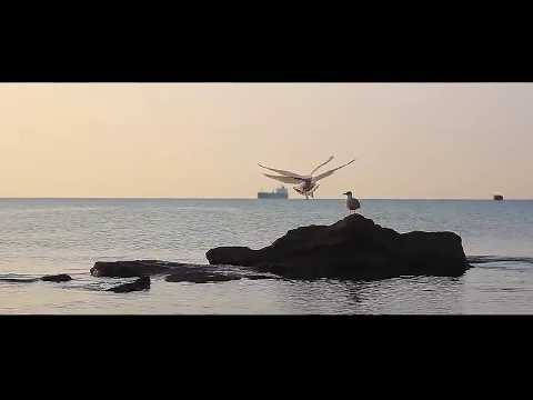 Крым, г. Феодосия, гостевой дом Изумруд, 8 911 0862500 (Viber. WhatsApp.Telegram)
