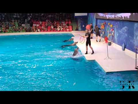 Dolphinarium Dubai Creek Park – Dolphin Show