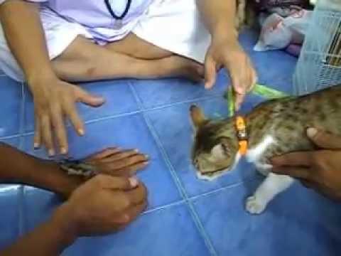 อ.พีรเดช จันทร์คำ ทดลองวิชา น้ำมันมหานิยมหนูแมว