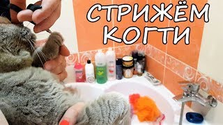 LIFE VLOG: НОВЫЕ САПОГИ/ Подстригаем Максику Когти, Котёнок Вырывается ЧТО ДЕЛАТЬ? Лика не в танце