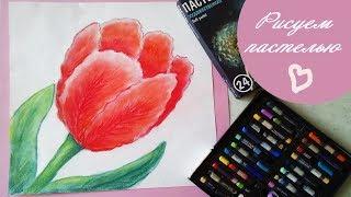 DIY КАК НАРИСОВАТЬ ТЮЛЬПАН Урок рисования рисуем цветы пастелью