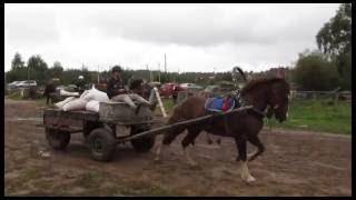 """Фестиваль """"Рабочая лошадь России"""" \ Festival """"Workhorse Russian"""""""