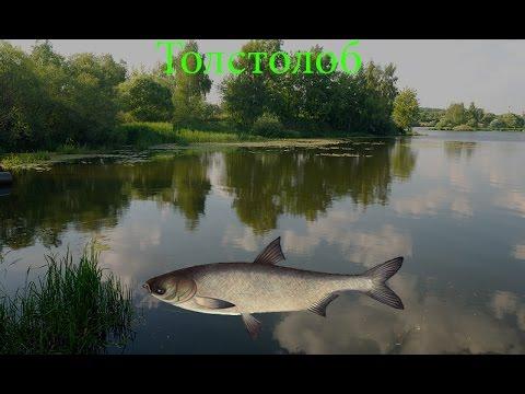 реальная рыбалка где и на что ловить толстолобика