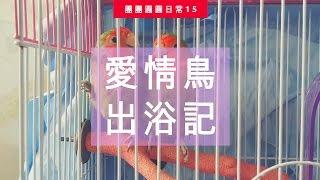 小鸚出浴記 | 團團圓圓生活日常#15