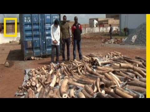 EXCLUSIVE: Confronting an Accused Ivory Smuggler | National Geographic