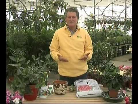 El jardinero en casa gardenias youtube for Jardinero en casa