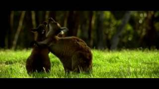 Влюбленные животные / Les animaux amoureux (2007) DVDRip