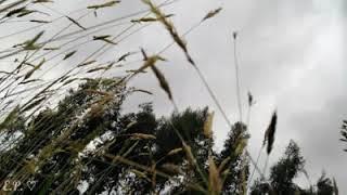 Dasher feat. Lydia Night - Gerard Way (Sub Español)