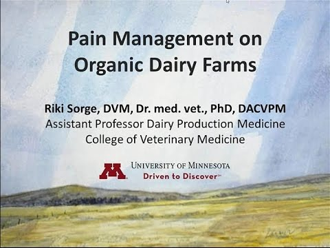 Pain Management on Organic Dairy Farms