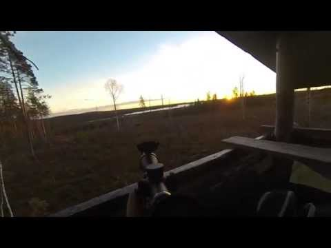 Moose hunting in Sweden