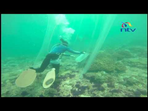 Ornamental Fish Trade: Kenya Seeking A Share Of Ornamental Fish Trade