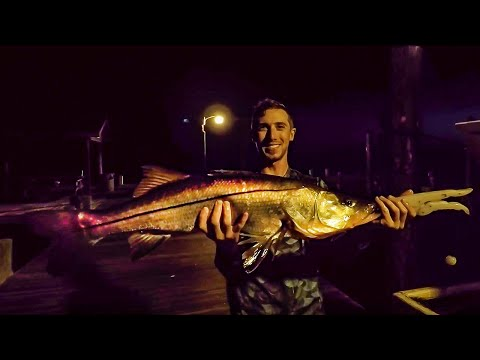 Catching Giant Snook On Live Ladyfish SW Florida - Episode 9