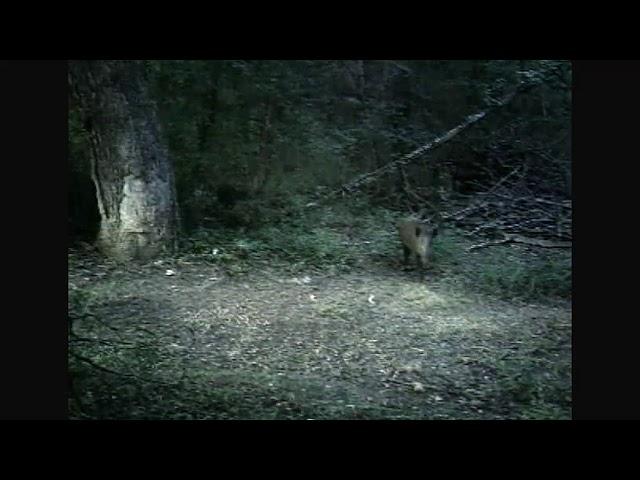 Deer startled