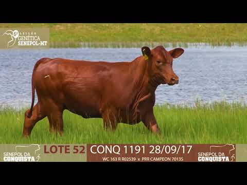 LOTE 52 CONQ 1191
