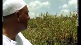 Mohammed Awel Salah (mohammed tebiye)